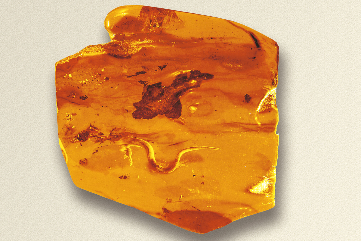 A Piece of Amber