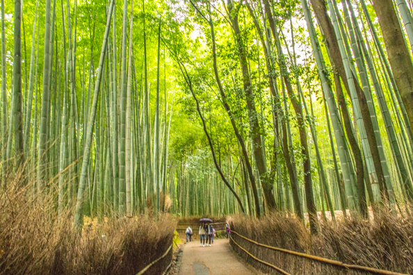 Bamboo grove in Arashiyama, Japan