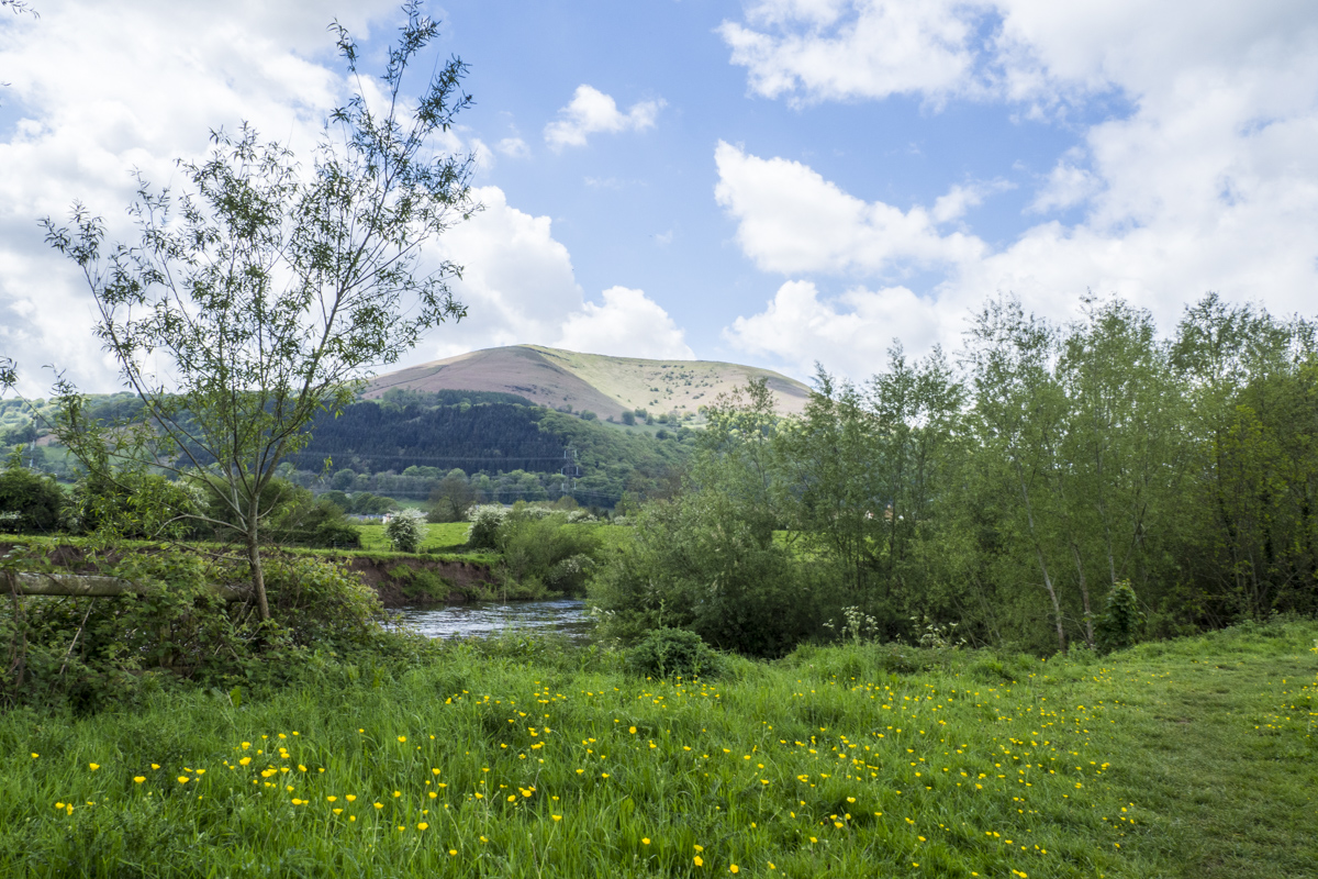 Casstle Meadows in Abergavenny in Wales 5101005