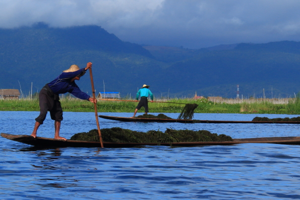 collecting algae on Lake Inle in Myanmar cropped
