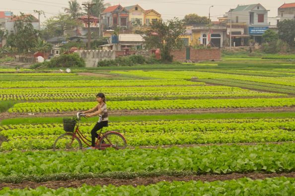 Cultivation in Vietnam