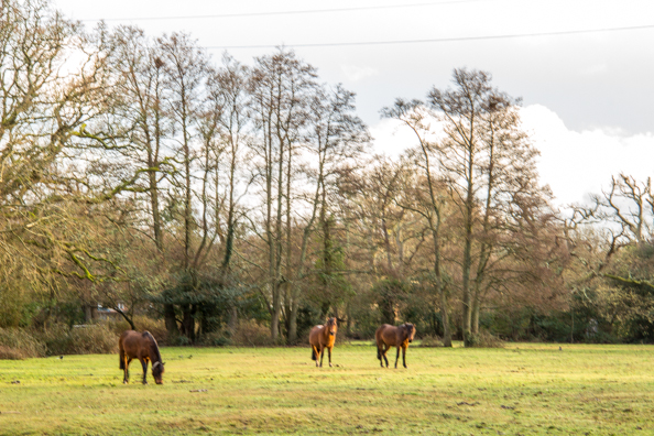 Culverton Meadow in Brockenhurst, New Forest