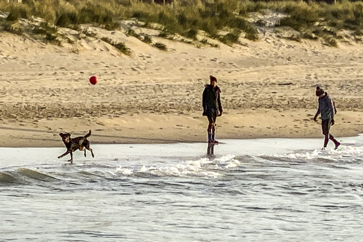 Dog Playing Football on Sandbanks Beach  5839