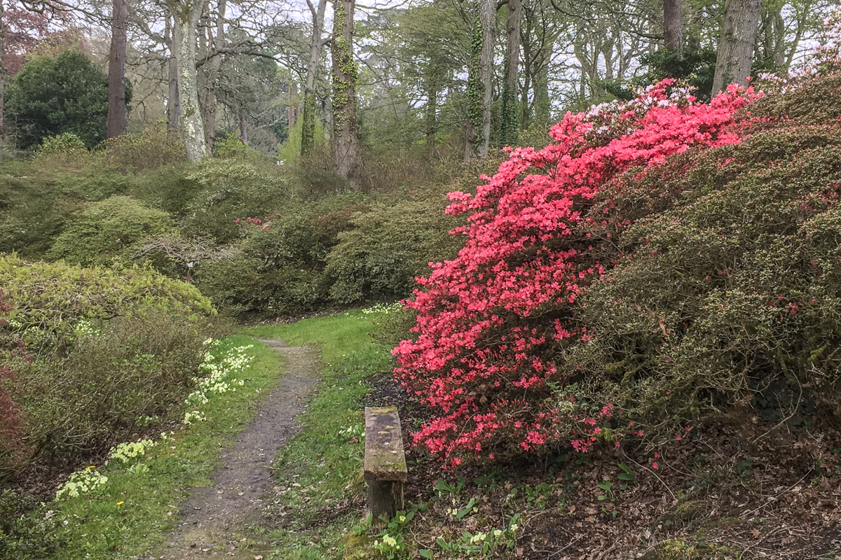 Exbury Gardens in the New Forest Hampshire UK 6111
