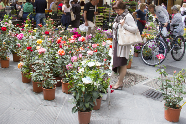 Flowers in the daily market in Pistoia Tuscany