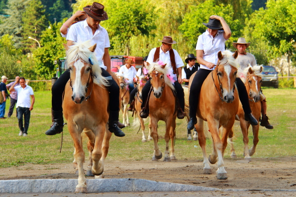Prancing palomino ponies anticipating their turn
