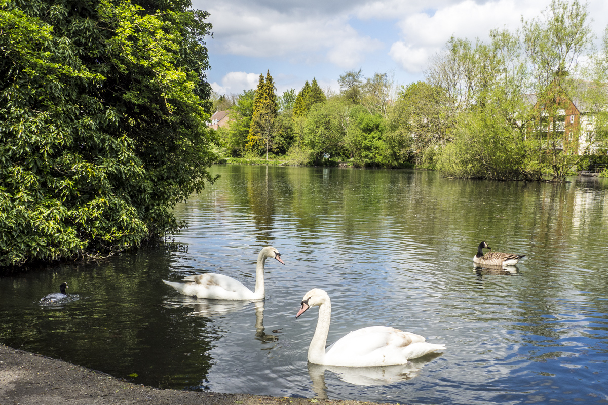 King's Pond in Alton, Hampshire 4293442