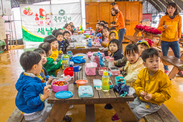 Korean children enjoying the Strawberry Experience on the Avenue of Metasequoia trees in Damyang, South Korea