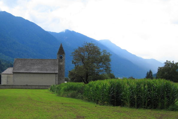 Maize growing behind the church of San Virgilio in Pinzolo