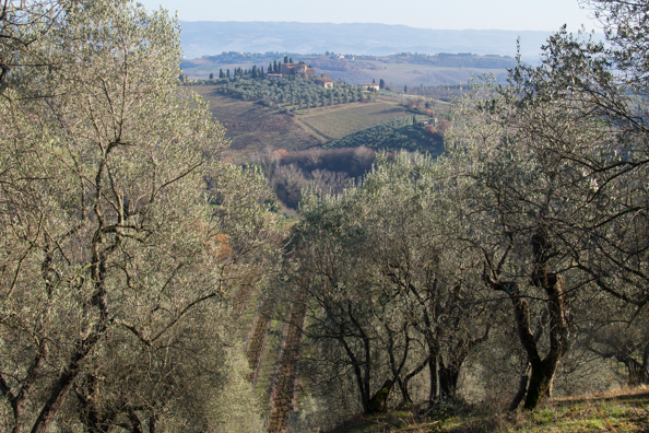 Olive trees and countryside from the walk arund the walls of San Gimignano, Tuscany Italy