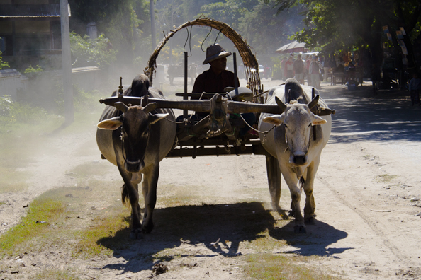 Ox Cart in Mingun Mandalay Myanmar