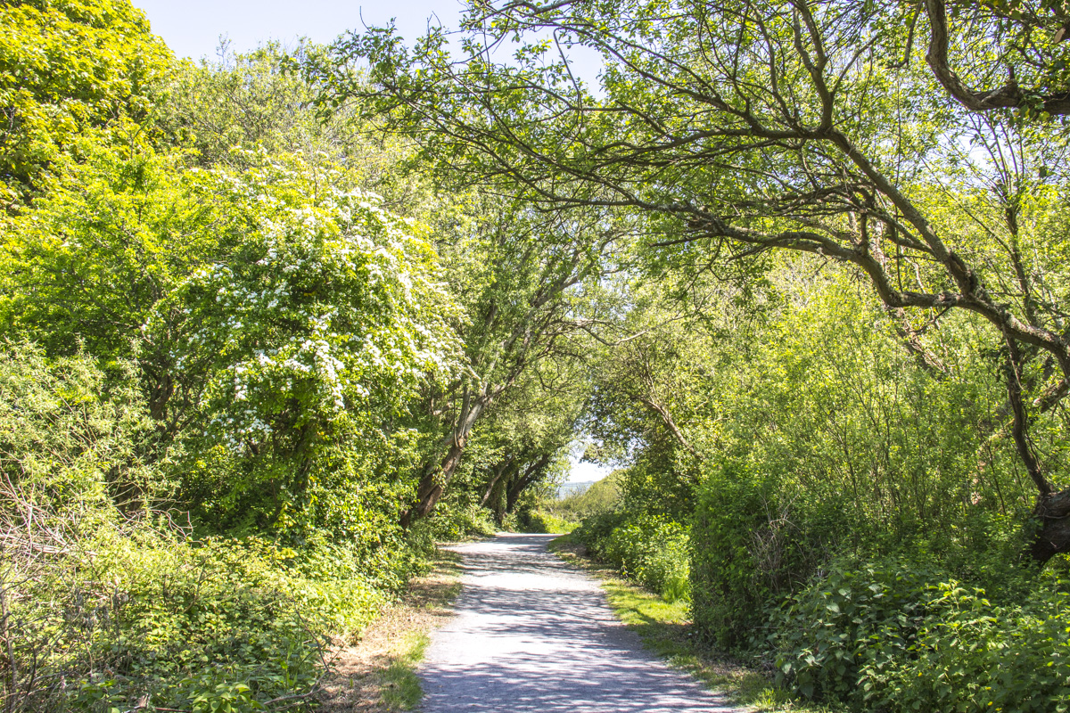 Path by the River Nevern Estuary in Newport, Pembrokeshire in Wales 8740