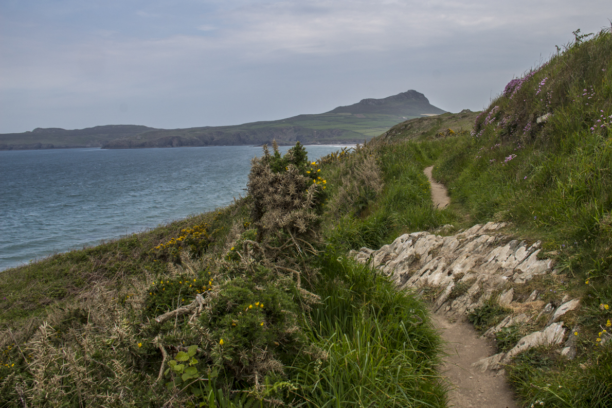 Pembrokeshire Coast Path on St David's Peninsula in Pembrokeshire, Wales   9127
