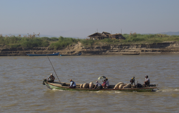 Pigs heading for market down the Ayeyarwaddy River near Mandalay Myanmar