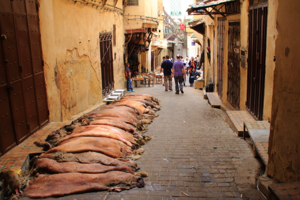 Sheep pelts in the medina in Fez Morocco
