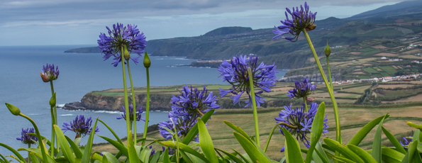 Views, Villages and Vegetation on São Miguel an Island in the Azores