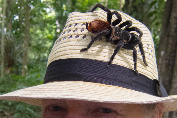 Tarantula on my hat at Yaxhá in Guatemala