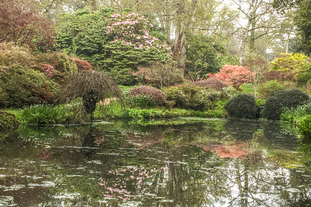 The Azalea Bowl at Exbury Gardens, New Forest, Hampshire, UK  6106