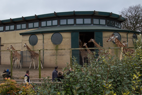 The Giraffe House at Marwell Zoo in Hampshire