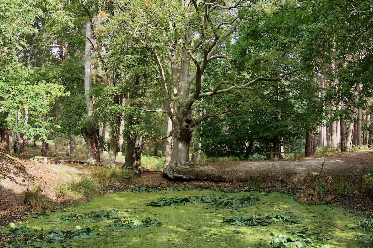 The Lily Pond on Brownsea Island