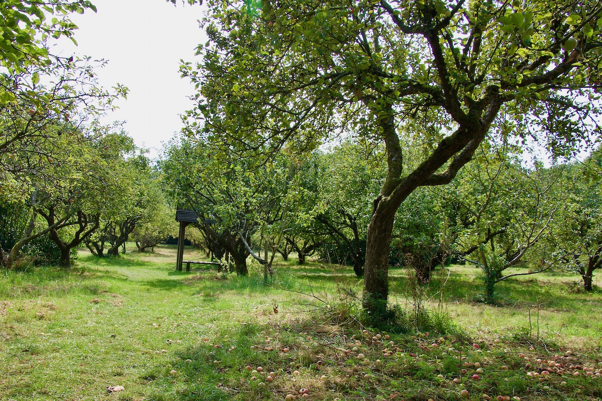 The Stanley Lord Orchard in Shenley, Herts