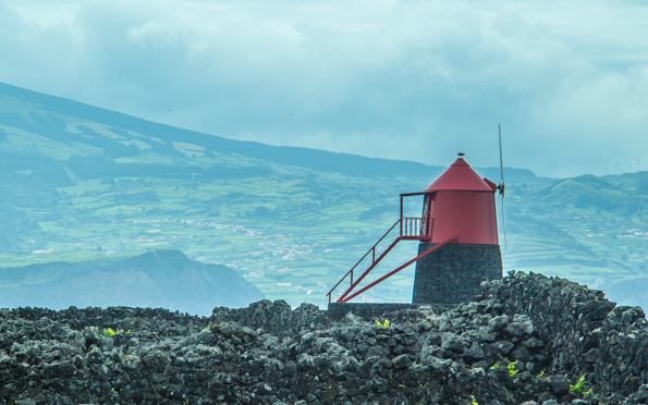 Vine growing landscape and windmill on Pico Island in the Azores