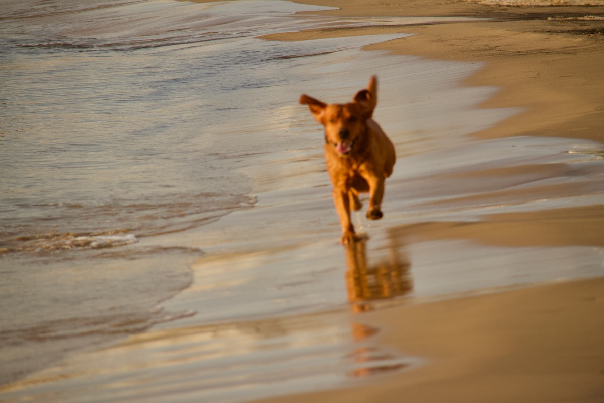 Young Dog Enjoying the Beach at Sandbnks in Dorset